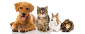 Devenir pet sitter : plus qu'une simple nounou pour animaux
