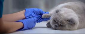 Physiothérapeute animalier
